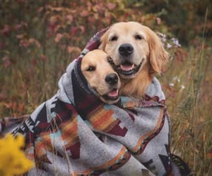animals, autumn, and dogs image