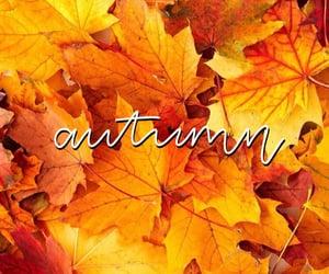 autumn, autumn wallpaper, and sfondi image