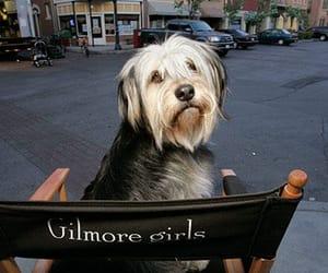 animals, dog, and gilmore girls image