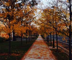 autumn, fall aesthetic, and books image