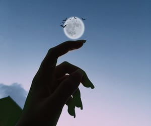 bats and moon image