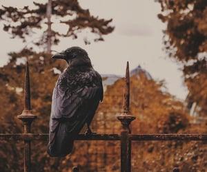 autumn, bird, and crow image