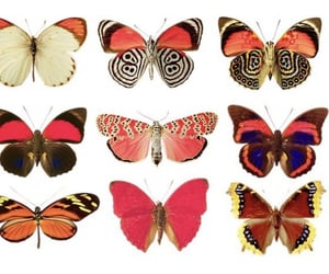butterfly, aesthetic, and tumblr image