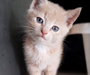 animals, kitten, and cute image