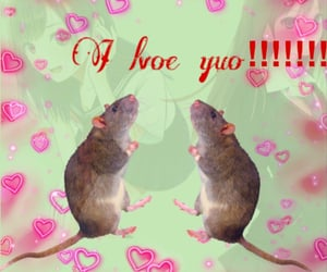 aesthetic and rat image
