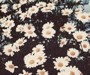 beautiful, daisies, and yellow image