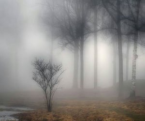 misty, forest, and nature image