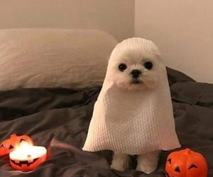 Halloween, dog, and cute image