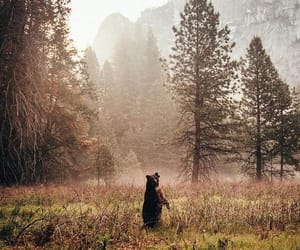 bear, animals, and nature image