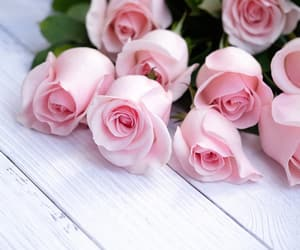 flores and rosas image