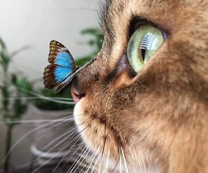 cat, animal, and beauty image