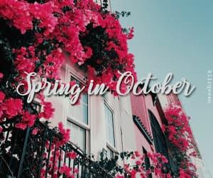 brasil, october, and primavera image