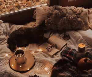 autumn, book, and cat image