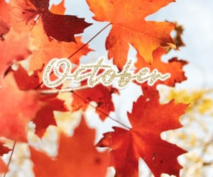 autumn, background, and october image