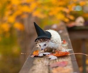 hedgehog, autumn, and Halloween image