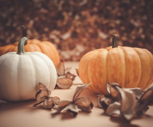 Apple Pie, Halloween, and nights image
