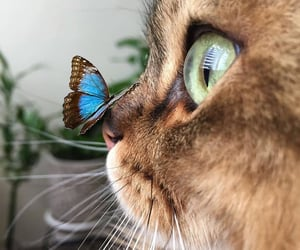 cat, beauty, and animal image