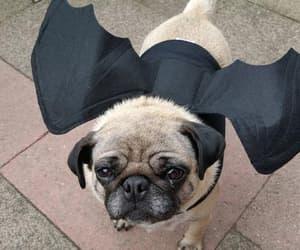 autumn, bat, and costume image