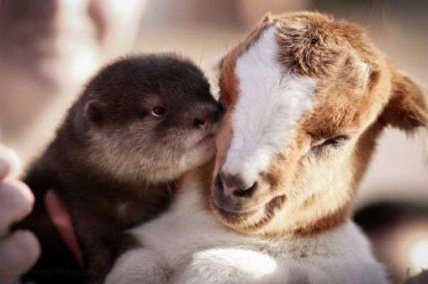 animal and cute image