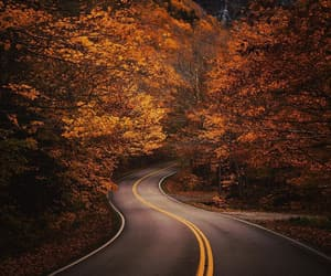 autumn, road, and gold image