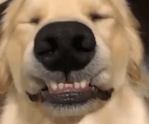 animal, dog, and animal gif image