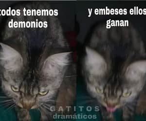 gatito, gato, and meme image