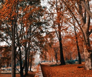 autumn, branches, and fall image