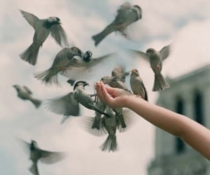 bird, photography, and animal image