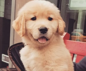 dog dogs, pet pets, and puppy puppies image