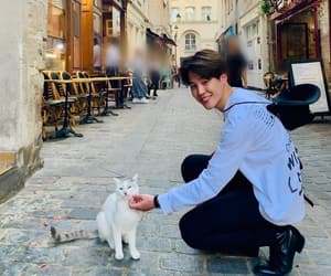 cat, serendipity, and bts image