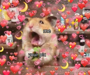 funny, hamster, and heart image
