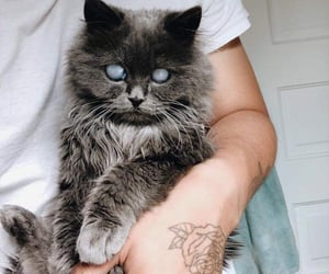 adopt, cat, and pet image