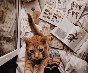 animal, autumn, and cat image