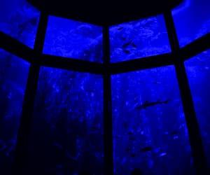 fish, water, and aquarium image