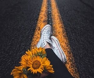 flowers, photography, and sunflower image