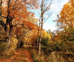 afternoon, autumn, and fall image