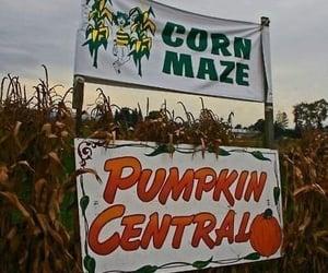 autumn, corn maze, and Halloween image