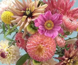 aesthetics, design, and flowers image
