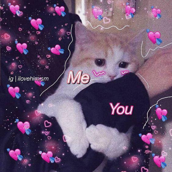 Idk Why I Keep Making Animal Ones Lovememes Love Memes Meme
