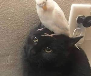 babies, bird, and cat image