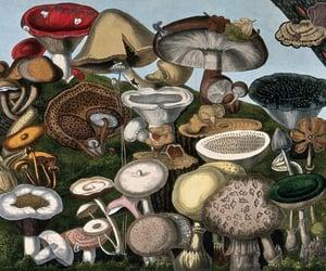 fungi, mushrooms, and scientific illustration image
