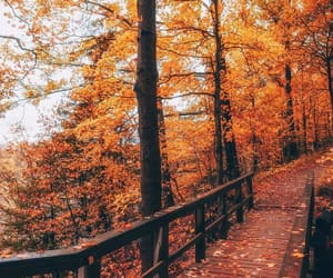 autumn, golden, and leave image