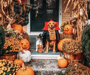 Halloween, autumn, and dog image