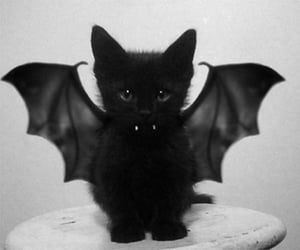 black, kitty, and wings image