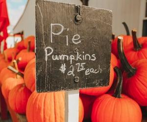 autumn, autumn colors, and pumpkin image