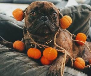 autumn, bulldog, and dog image