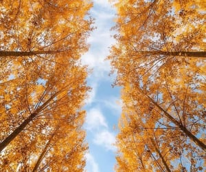 autumn, cielo, and exteriores image