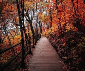 aesthetic, autumn, and beauty image