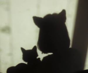 cat, girl, and shadow image