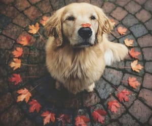 dog, autumn, and animal image